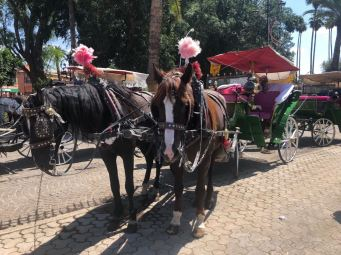 Horse and carriage ride round the old town